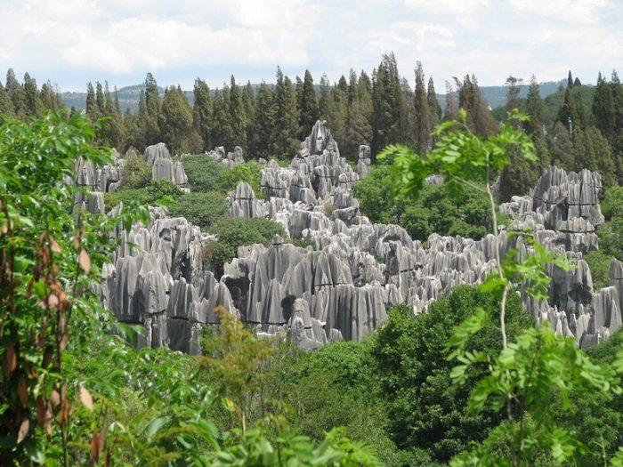 اینجا صحنهای از یک فیلم هالیوودی نیست! «جنگل شیلین» است