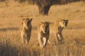 ۱۵ مکان حیرتانگیز برای دیدن حیوانات آفریقا