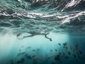 عنوان: جزیره فلورینا، اکوادور یک عکس از ماهی های رنگارنگ در نزدیکی جزیره فلورینا در گالاپاگوس. در این آبها بیش از 5000گونه مختلف ماهی زندگی می کنند. عکاس: Joel Sartore