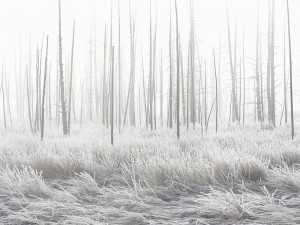عنوان: پارک ملی یلو استون، آمریکا پایین حوضچه آب گرمی که به وسیله آتشفشان گرم می شود. این منطقه زمستان های طولانی دارد و ورزش های زمستانی در آن بسیار محبوب است. عکاس: Jeff Vanuga