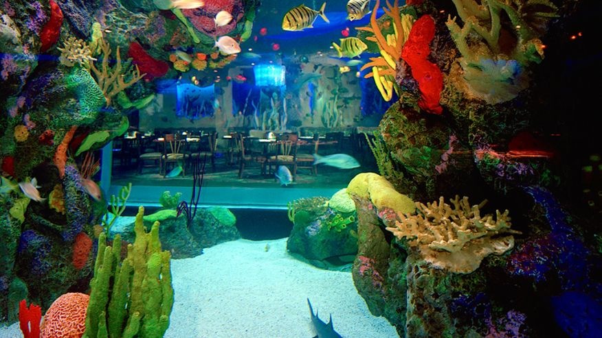 Amazing underwater restaurants4