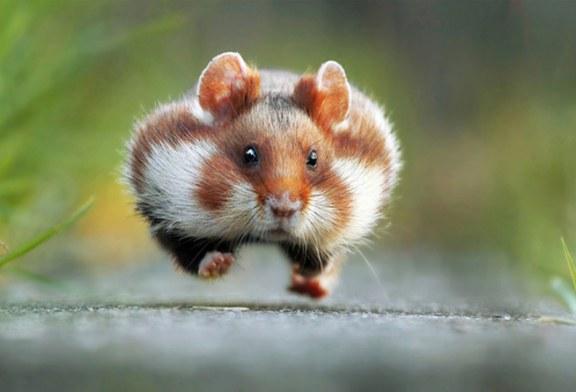 برندگان خنده دار ترین عکس ها از حیوانات