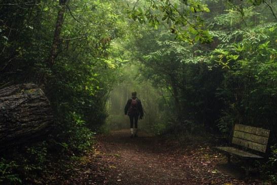 درختان غول پیکر پارک ملی ردوود آمریکا