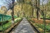 آشنایی با باغ زیبای هارون در کشمیر