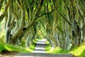 تونل درختی بسیار دیدنی در ایرلند