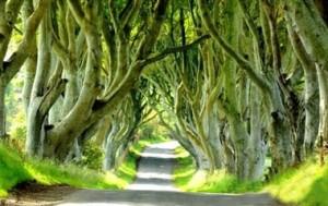 تونلی از جنس درخت در ایرلند