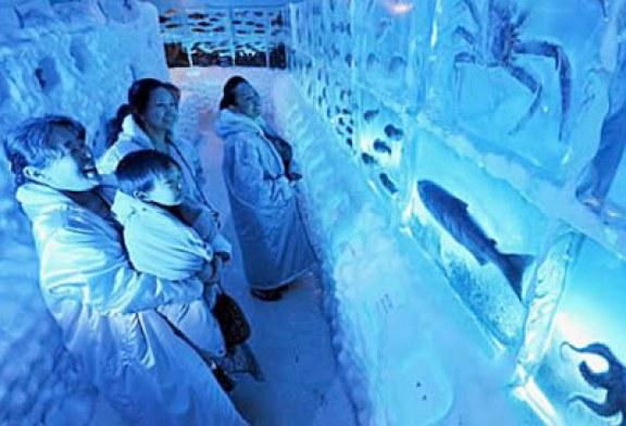 آکواریوم یخی به همراه جانوان یخ زده در ژاپن