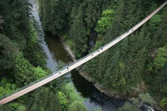 بلندترین پل معلق در دنیا بر فراز جنگل