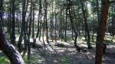 جنگل رقصان روسیه