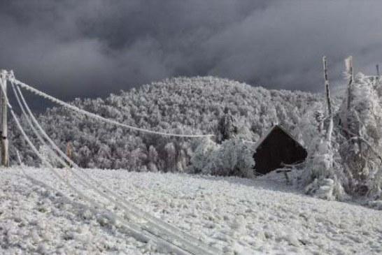 جنگلی که ممکن است در آن یخ بزنید!