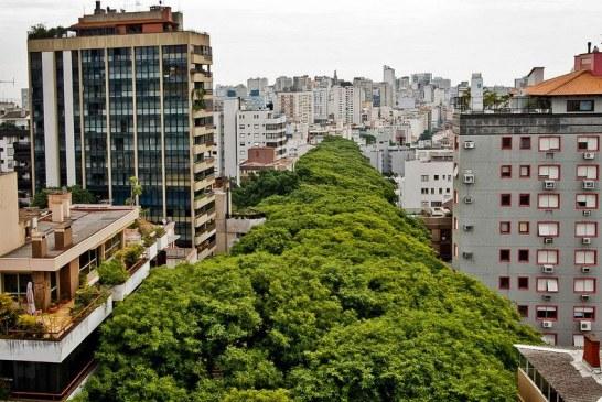 زیبا ترین خیابان دنیا که در برزیل قرار دارد + عکس