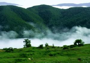 جنگلی در ایران با قدمت 190 میلیون سال!