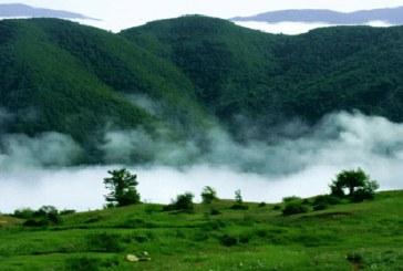 جنگلی در ایران با قدمت ۱۹۰ میلیون سال!