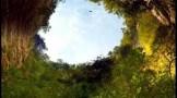 جنگلی در اعماق غار! + عکس ها