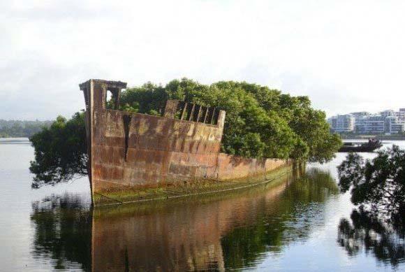 این یک کشتی است یا یک جنگل؟! +عکس