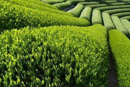 باغ گل لاهیجان را ببینید و لذت ببرید +عکس