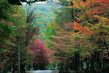 النگدره، یکی از زیباترین جنگل های ایران