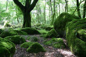 معرفی جنگل دوهزار در تنکابن + تصویر