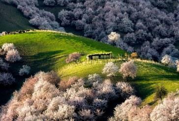 زردآلو دوست دارید؟ به دره زردآلو ها بروید!