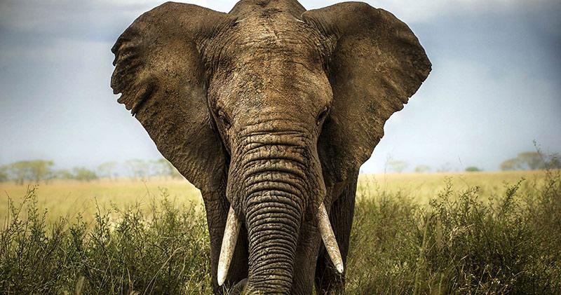 آشنایی با حقایقی جالب در مورد 5 حیوان شگفت انگیز آفریقا