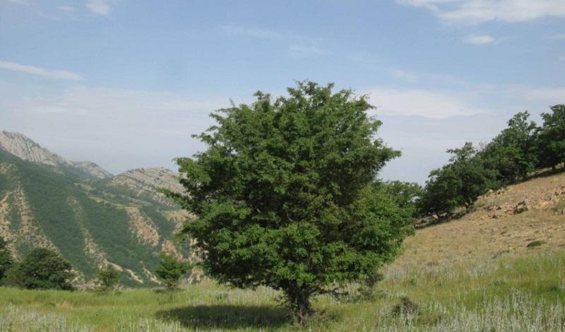 باغ دره خراسان شمالی