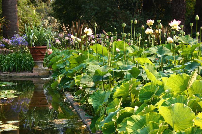باغ لوتوسلند