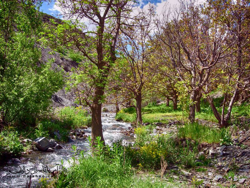 همجواری با دامنه کوهستان، رودخانه و باغهای میوه هوای طرقبه را بینظیر کرده است.