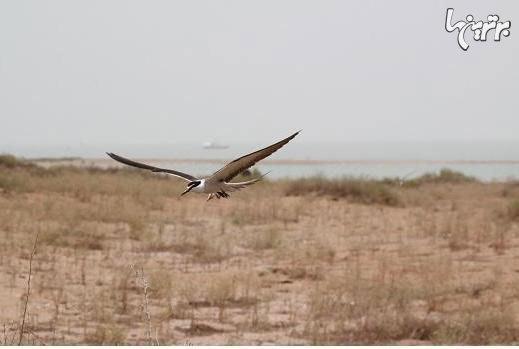 پرونده: جزایر ایرانی خلیج فارس