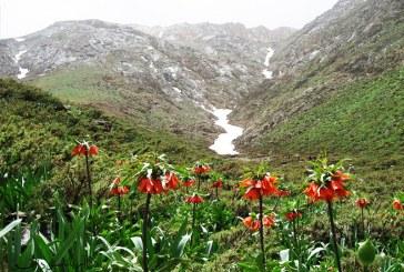 تور آبشار پونهزار تا گلپایگان