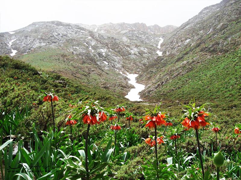 فصل بهار تنها فرصتی است که میتوان آبشار پرآب و دشت پر از گل را دید.