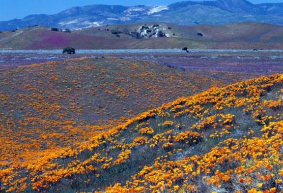 ۲۰ مکان جادویی برای بازدید از گل های بهاری
