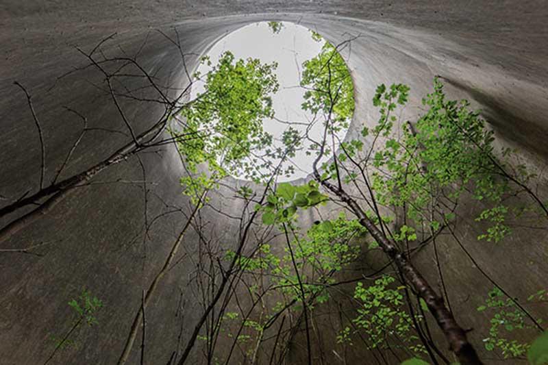 رشد گیاهان در مکان های متروکه
