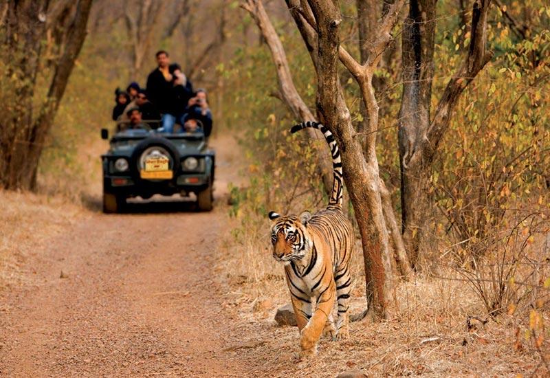 پارک ملی حیات وحش هندوستان