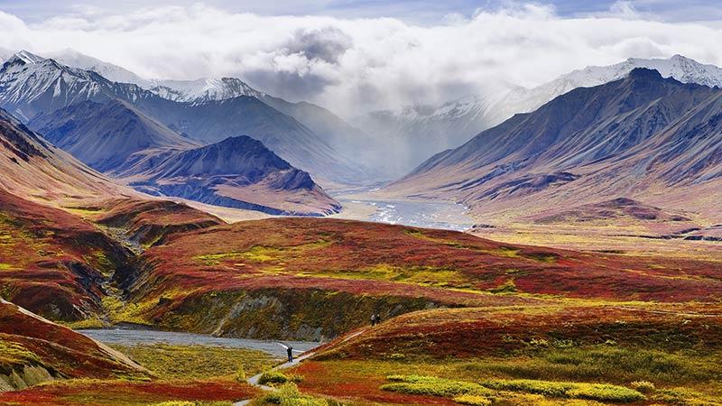سافاری در آلاسکا
