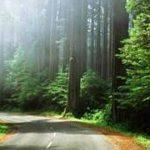 معرفی پارک جنگلی کیاشهر