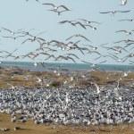 جزیره ام الگرم، جزیره امن پرندگان مهاجر در خلیج فارس