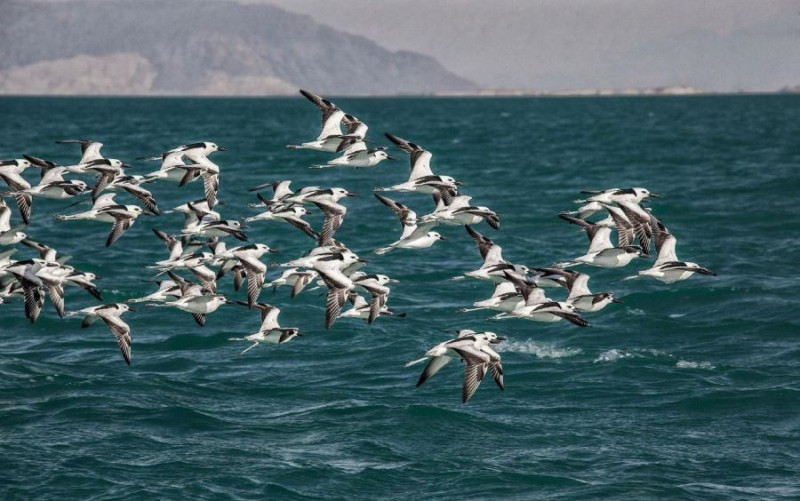 پرندگان جزیره