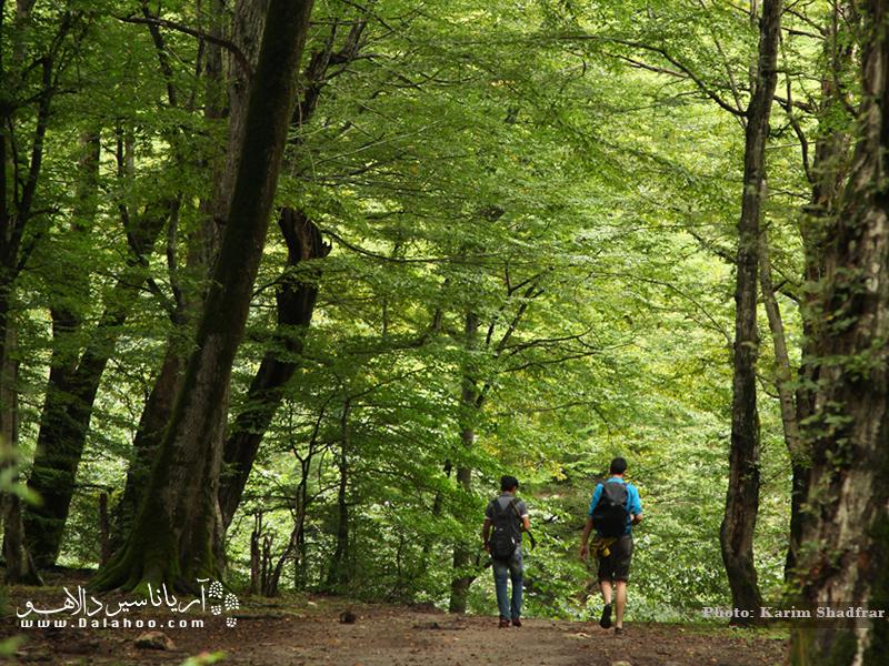 جنگل پیمایی در دل جنگلهای هزار جریب.