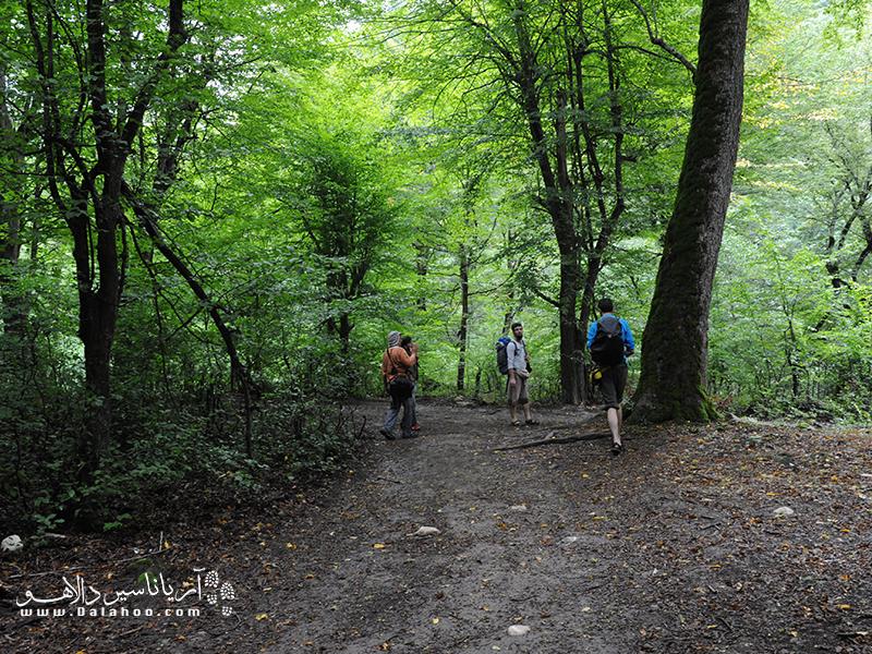 مسیر جنگلی مسیر آبشار اسپهاو.