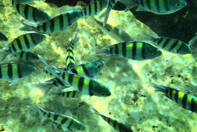 ماهیان زینتی ساحل دریای هنگام