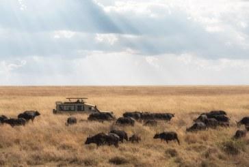 سافاری هیجانانگیز در آفریقا