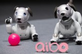نخستین تجربیات ربات سگ سونی Aibo