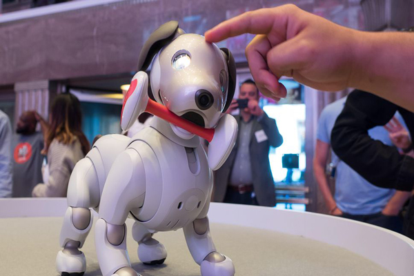 ربات سگ سونی