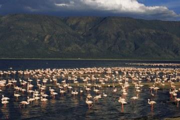 دریاچه ناترون تانزانیا، دریاچه مومیایی در آفریقا