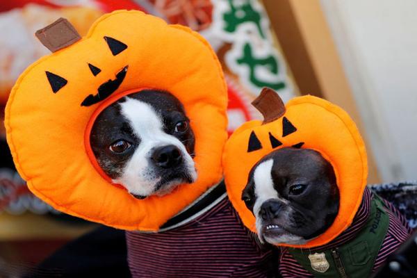تصاویری از جشن هالووین
