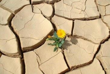 روز جهانی مبارزه با بیابان زایی و خشکسالی