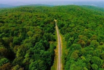 ثبت جهانی جنگلهای هیرکانی منظری تازه برای نسلهای بعد میگشاید