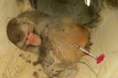 نگرانی مسافران از میمونهای وحشی در شمال ایران | «رزوسها» چطور از سیاهکل سر درآوردند؟