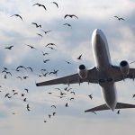 برخورد هواپیما با پرنده پرواز گرگان – مشهد را زمینگیر کرد