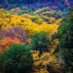 دیدنی های گرگان؛ از ناهارخوران تا جنگل توسکستان